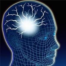 Las mejores hierbas para apoyar la función cerebral  y la memoria