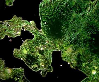 Las propiedades de la Spirulina