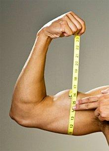El Óxido Nítrico y el crecimiento muscular