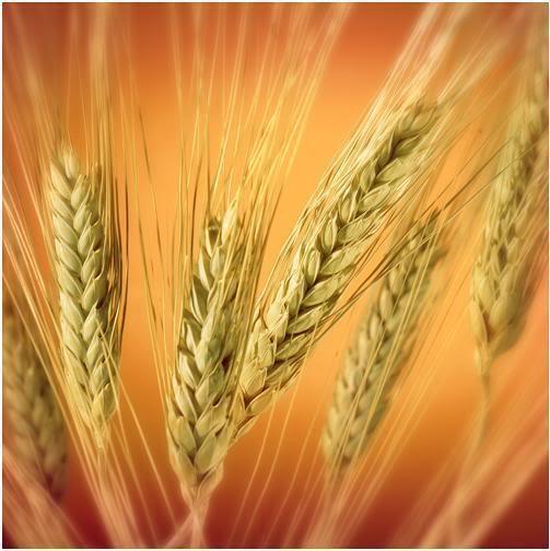 Beneficios de una dieta rica en fibra