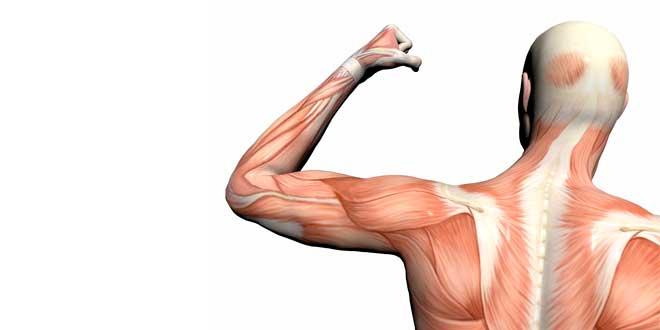 tipos-fibras-musculares-diferencias