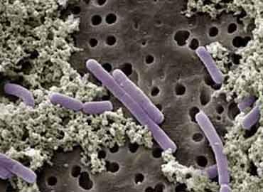 El transplante de flora intestinal podría ser posible