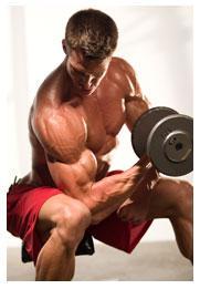 Las vías energéticas del músculo