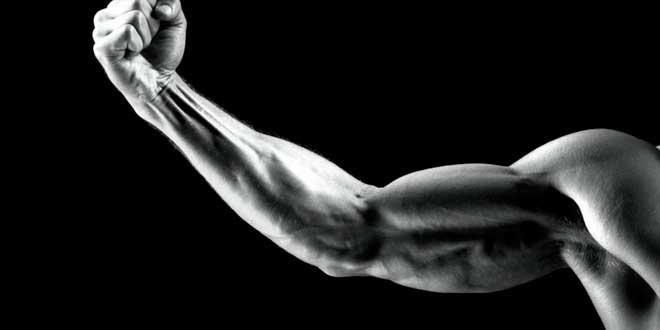Tamaño del músculo