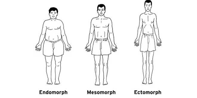 ¿Qué Tipo de Metabolismo Tienes?