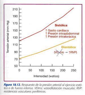 El efecto del ejercicio sobre la presión arterial..