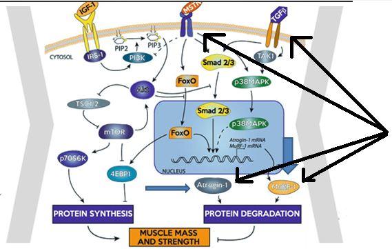 expresion-proteinas