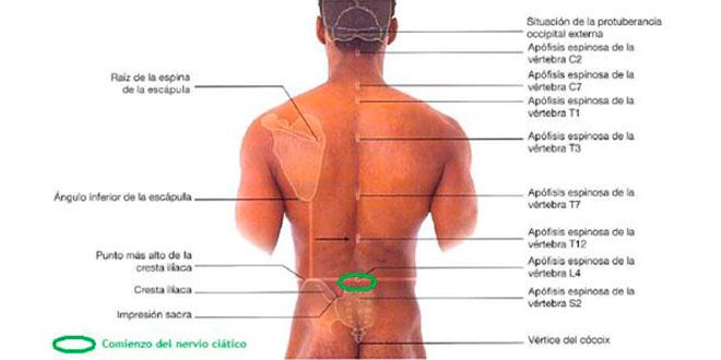 Los dolores en la espátula izquierda y el cuello