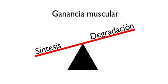 ganancia-muscular