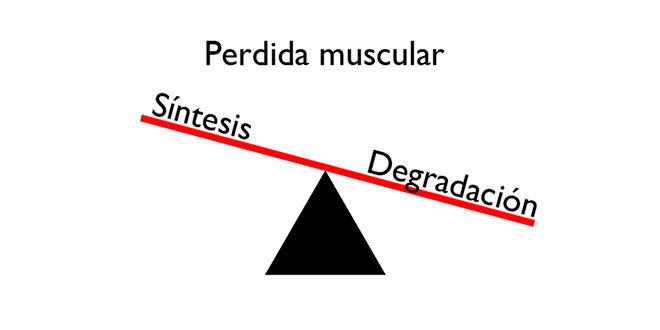 perdida-muscular