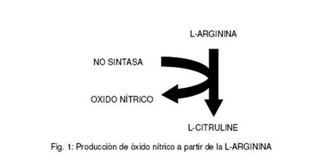 produccion-oxido-nitrico