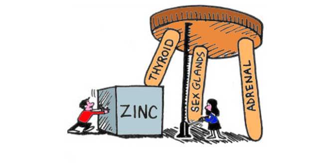 funciones-zinc
