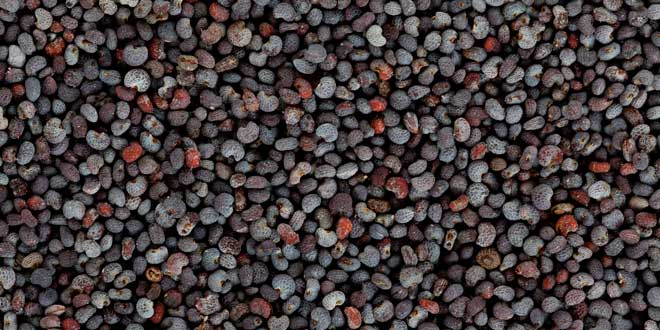 Los grandes beneficios de las semillas de amapola