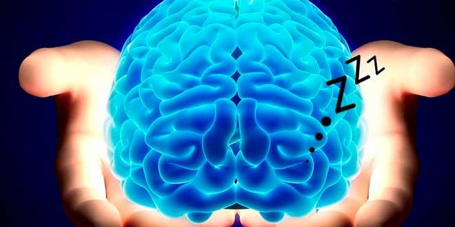 Papel del cerebro durante el sueño