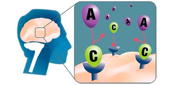 La cafeína bloquea los receptores de adenosina