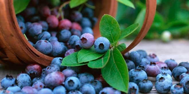 Acai Berry: Qué es, Propiedades y Beneficios de las Bayas para la Salud