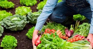Alimentos ECO, Bio y Ecológicos