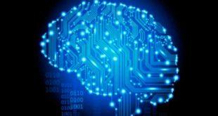 Creatina Función Cerebral