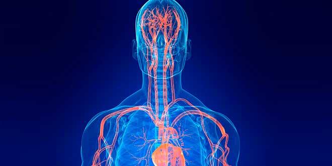 L-arginina, producción de óxido nítrico e hipertrofia muscular