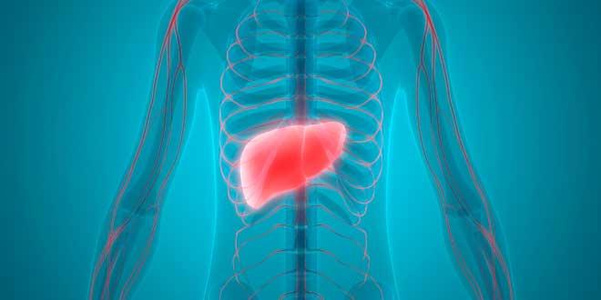 TUDCA hepatoprotector