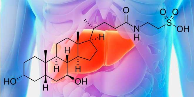 TUDCA o Ácido Tauroursodeoxicólico: Protector Hepático