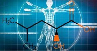 HICA (Ácido Léucico): Metabolito de la Leucina para el Crecimiento Muscular