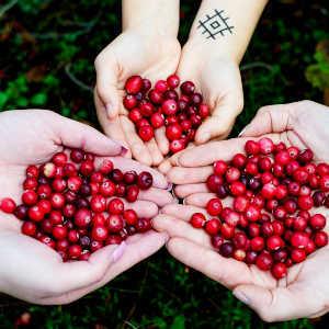 Mirtillo Rosso, Benefici e Proprietà